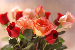 roses for Nana by clippercarrillo
