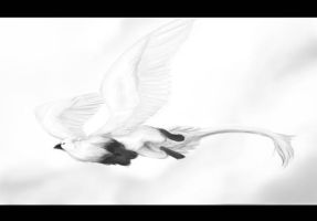 Ivory Gull Griffin by Blackpassion777