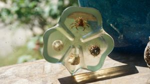 Clear Clover Paper Weight with Sea Critters Inside by NoxieStock