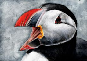 Puffin by Solinni