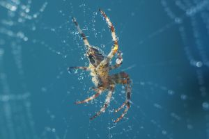 Spider by fotomartinez