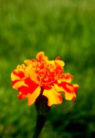 Orange by AbdoHad