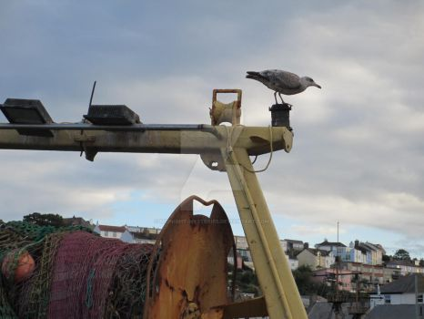 The Gull at the Harbour by midnight-mysteries