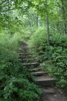Overgrown Path by highlyimprobable