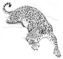 Leopard by camiloandres