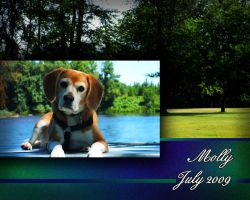 Rogue River Beagle by PeterPawn