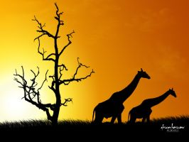 African Horizons by Jkvect