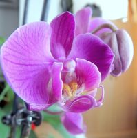 orchid by AndraMarin