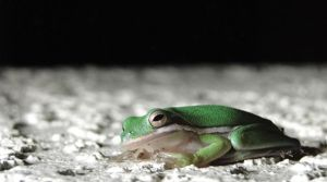 Night Frog by NamelessPerception