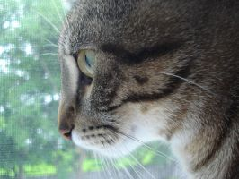 Cat's Profile by Chikaboue