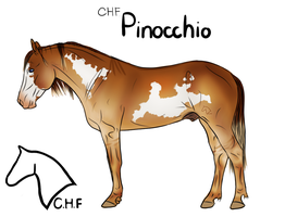 CHF Pinocchio -- SOLD by CherryHillFarms