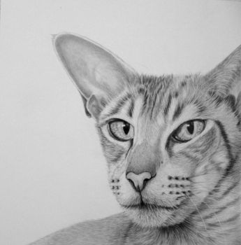 Graphite drawing Cat by mo62