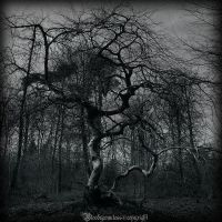 Tortured tree III by CountessBloody