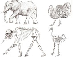 animal and bones study by Ziddius