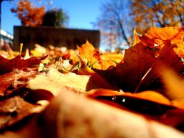 .:Leaves:. by shanuja