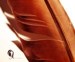 Photo-  Feather - 534 by resurgere