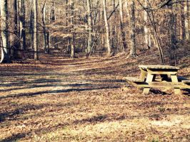 365 Project-Day 43: Old Picnic Bench by hourglass-paperboats