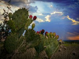 Cactus At Dusk by AndrewCarrell1969