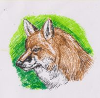Fox in the green by ArcticIceWolf