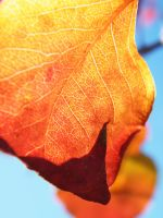 Leaf of Flame by iluvobiwan91