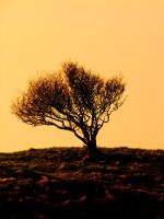 sunset tree by meenags