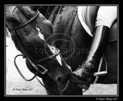 Nose to Boot by equusimages