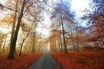 november road by augenweide