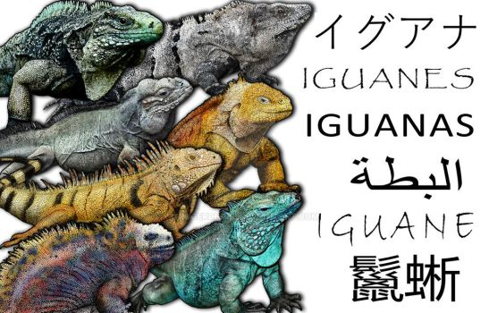 Iguanas Collage by rogerdhall