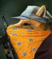 Real life Guerrilla fox by SteinWill