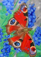 Butterfly In Bluebonnets by KW-Scott