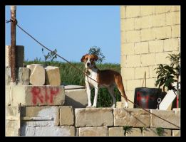 watch dog by lucaport