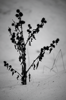 Dead of Winter by DBoydPhotography