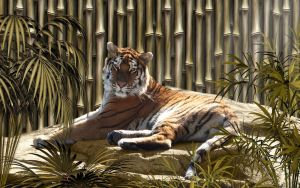Bamboo Tiger by Frankief