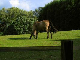 Horse Eating by glawrence