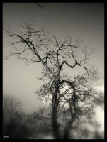 Tree II by lostknightkg