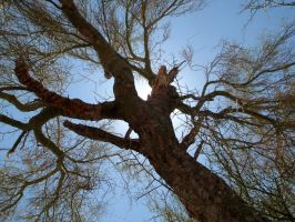 Shade Of A Palo Verde Tree by ClymberPaddler