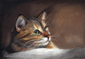 Cat (portrait) by Lillian-Bann
