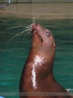 long sea lion whiskers by KIARAsART