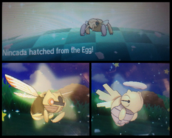 Finally! - Shiny Nincada!
