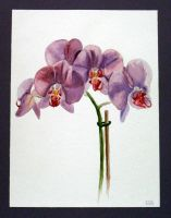 Violet Orchid by Feuerlilie