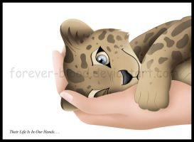 Amur Leopard by Forever-Blood