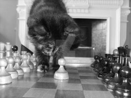 Kitty Chess II by Hanaah