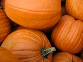 Pumpkins by handbagXwhore