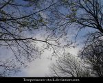 Tree 3-Stock by tempestazure-Stock