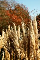 Autumn Pampas by EarthHart