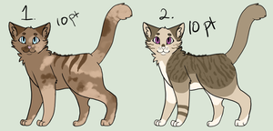 CAT ADOPTS *CLOSED* by StarDustCatAdopts