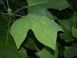 rain on leaves 3 by Irie-Stock