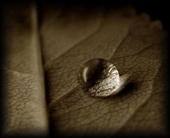 Sepia leaf II by ktso