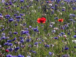 Stock - Wildflower Meadow II by rockgem