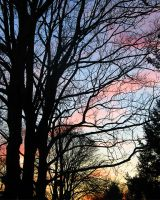 Sunset trees by Collage